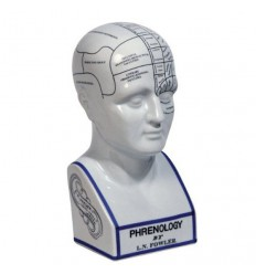 AUTHENTIC MODELS -PHRENOLOGY HEAD Shop Online